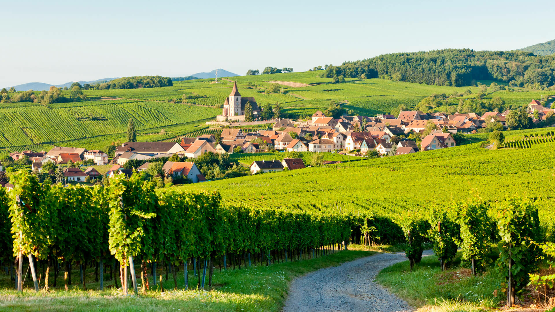 Prestigious tours at the heart of luxury vineyards